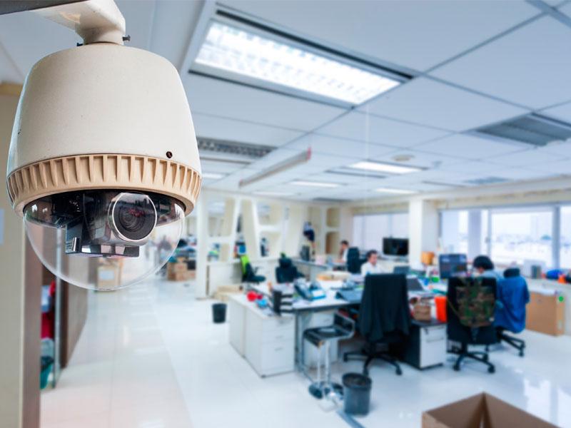 vigilância orgânica curitiba